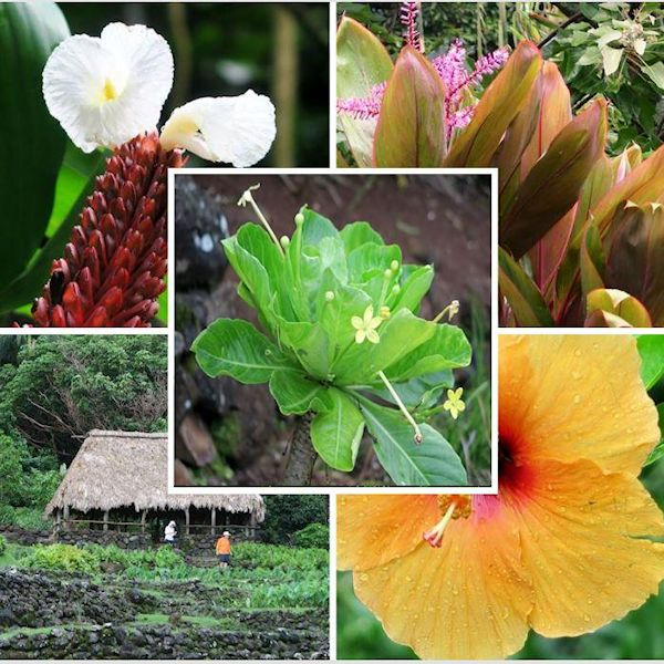National Tropical Botanical Garden Limahuli Garden U0026 Preserve: Kauai, Hawaii