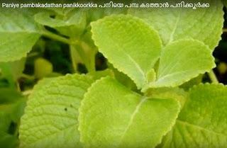 panikkoorkka for kicking off pani fever