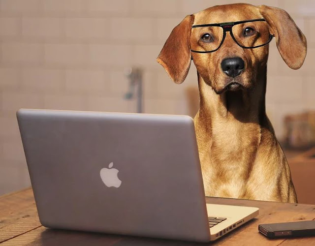 how dogs impact business
