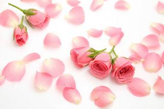as rosas e a magia