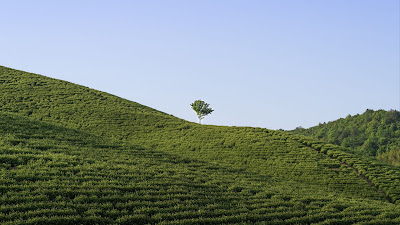 Beautiful view of endless green lonely tree