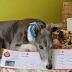 ΔΟΤΗΣ ΑΙΜΑΤΟΣ! Ο σκύλος που έσωσε με το αίμα του 88 σκύλους