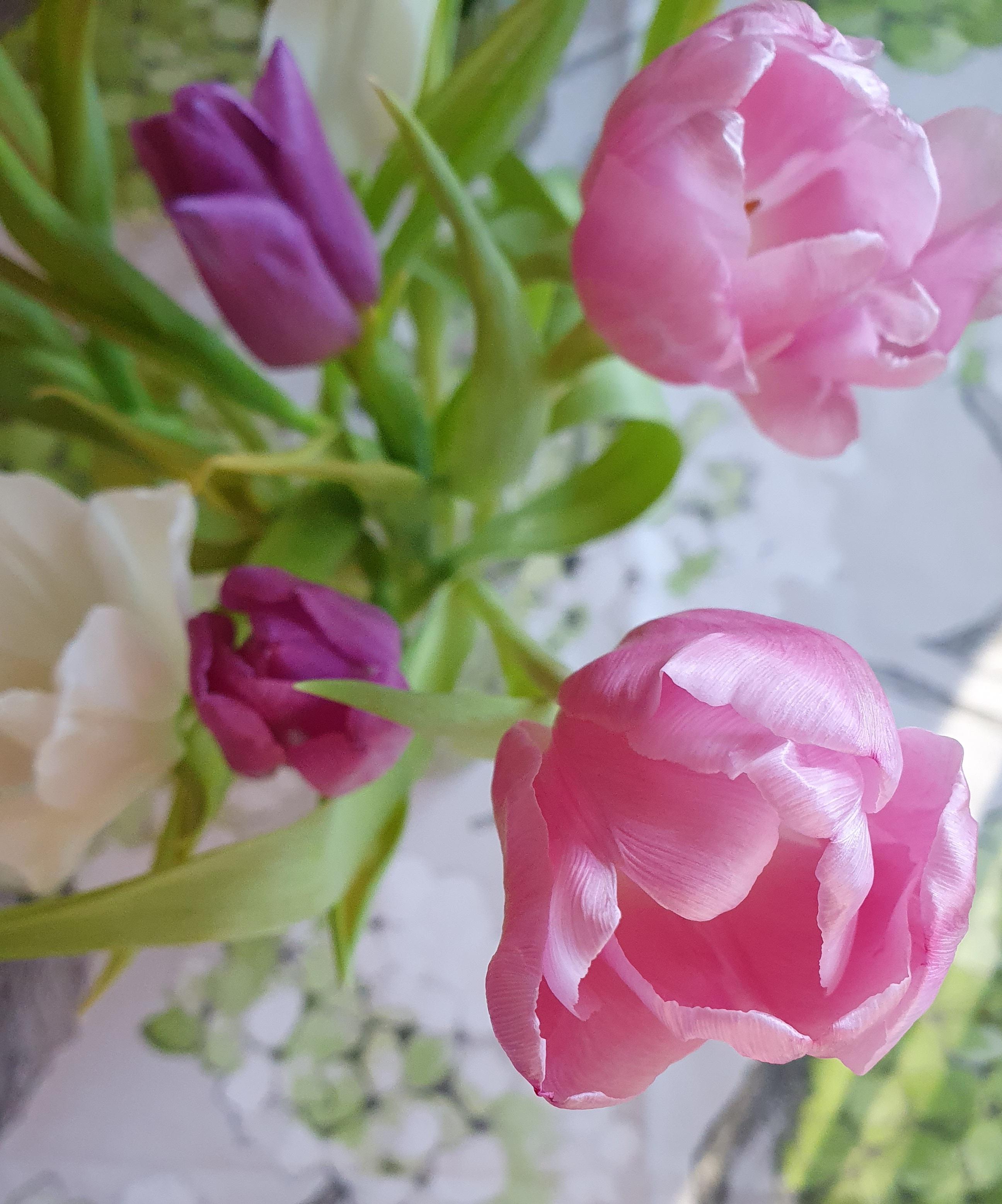 vaaleanpunaisia, liiloja ja valkoisia tulppaaneita