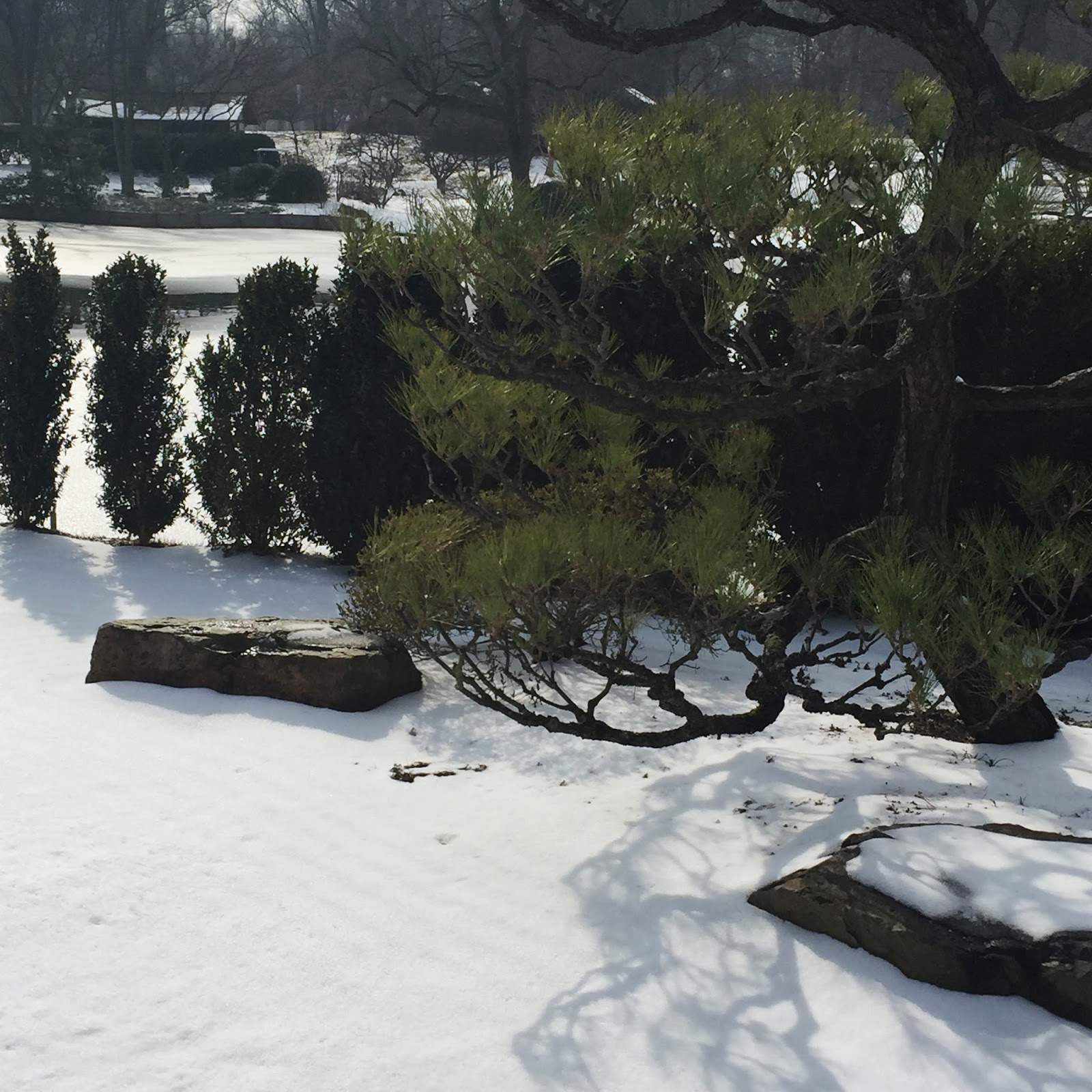 finding joy in all things snow at the missouri botanical garden