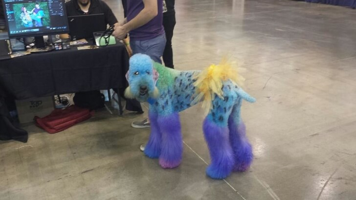The New Trend Of Artistic Pet Haircuts And Grooming Is Seriously Confusing Us