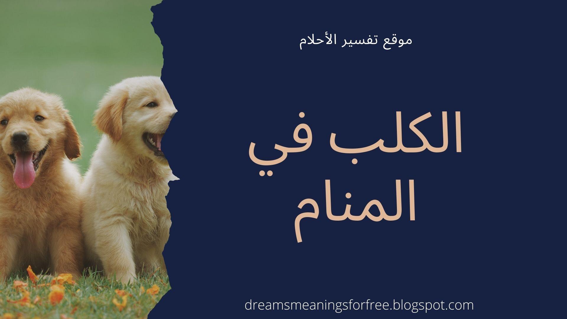 الكلب في المنام تفسير رؤية الكلب والكلبة والكلاب في الحلم