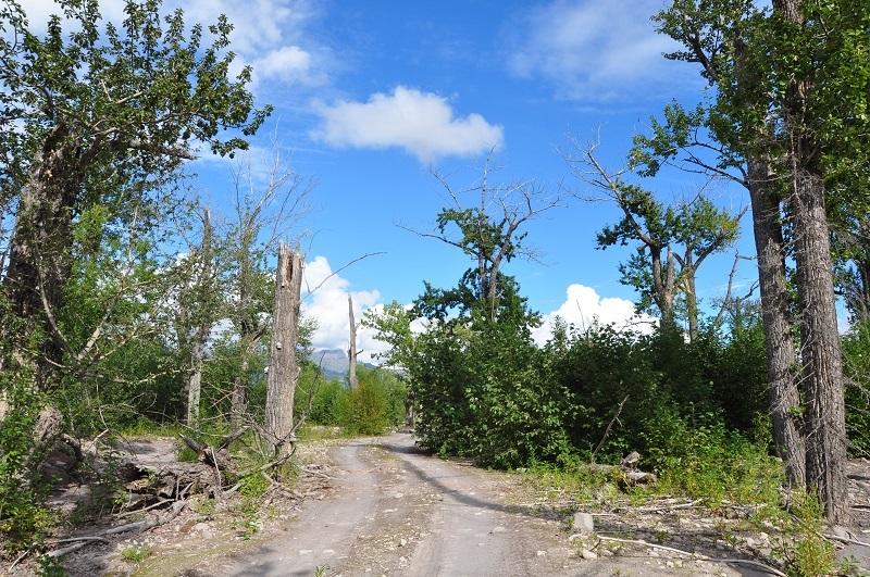 мертвые леса вулкан шивелуч камчатка