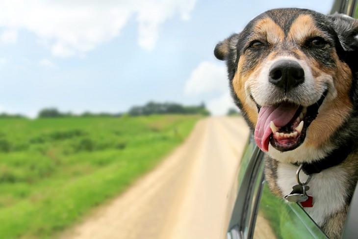 Consejos para viajar en familia con perros