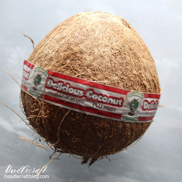 Coconut to turn into jewelry