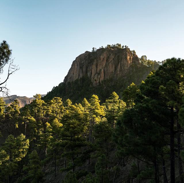 Wandern auf Gran Canaria – Von El Juncal ins Naturschutzgebiet Pajonales 15