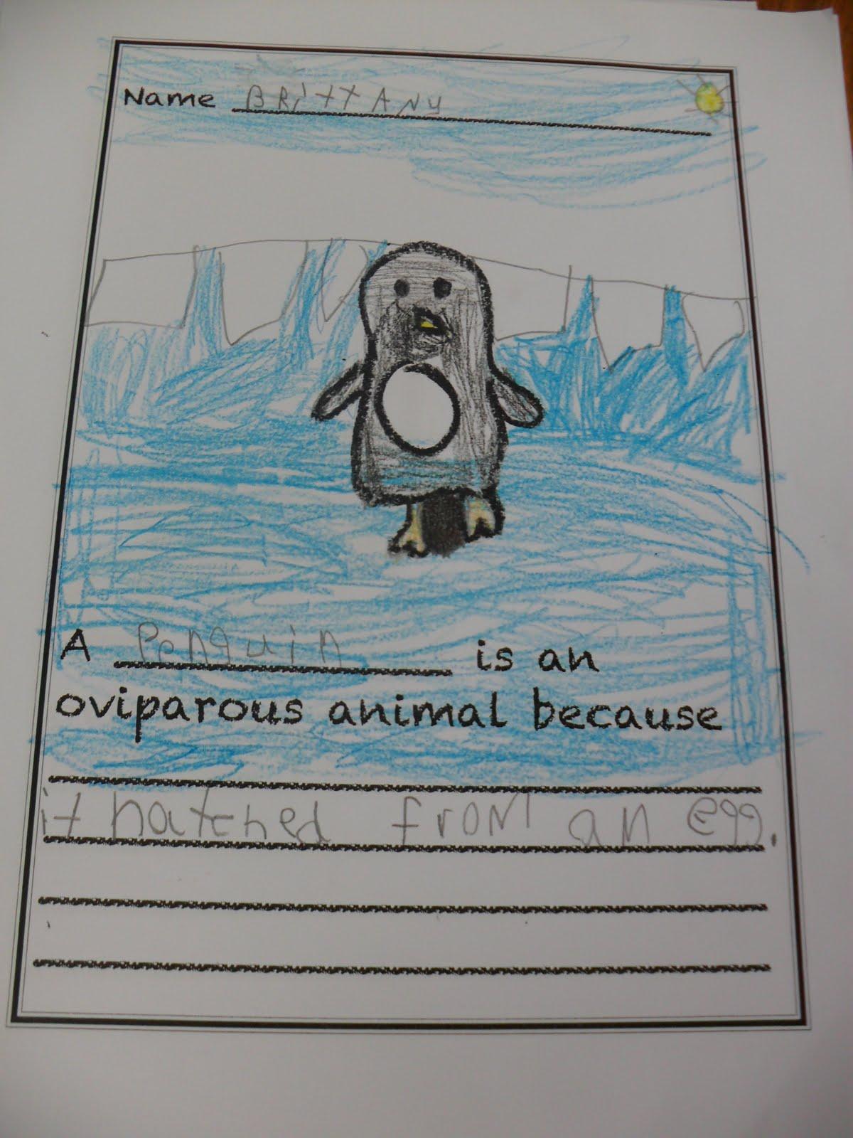 Kindergarten Oviparous Worksheets Animal And Egg