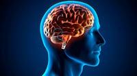 La creación de neuronas decrece a medida que envejecemos