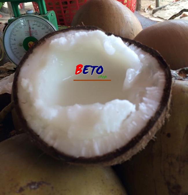 dừa sáp cầu kè giá gốc