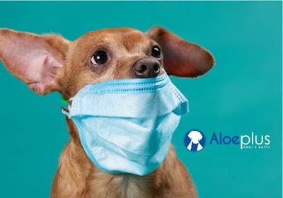 Coronavirus, come comportarsi con cani e gatti per evitare rischi