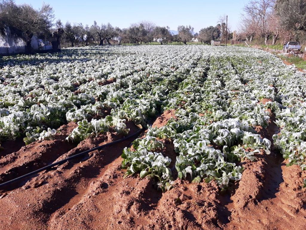 Δήμος Λεβαδέων : Yποβολή αιτήσεων στον ΕΛΓΑ για αποζημιώσεις λόγω παγετού