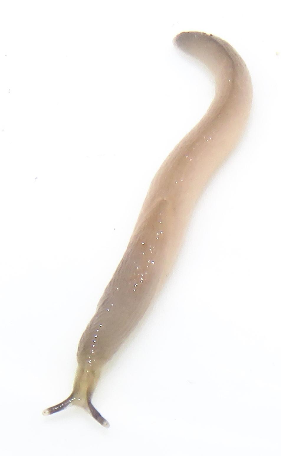 White Worms In Kitchen Floor