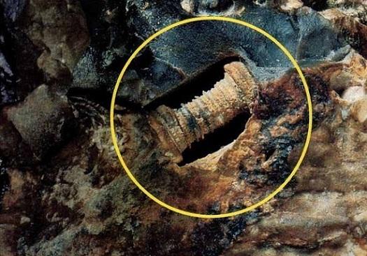 tornillo fosilizado