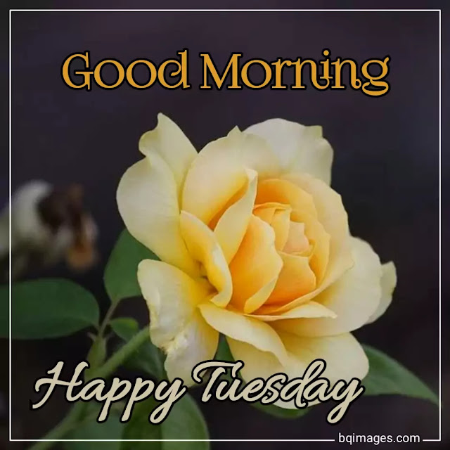 good morning tuesday images download