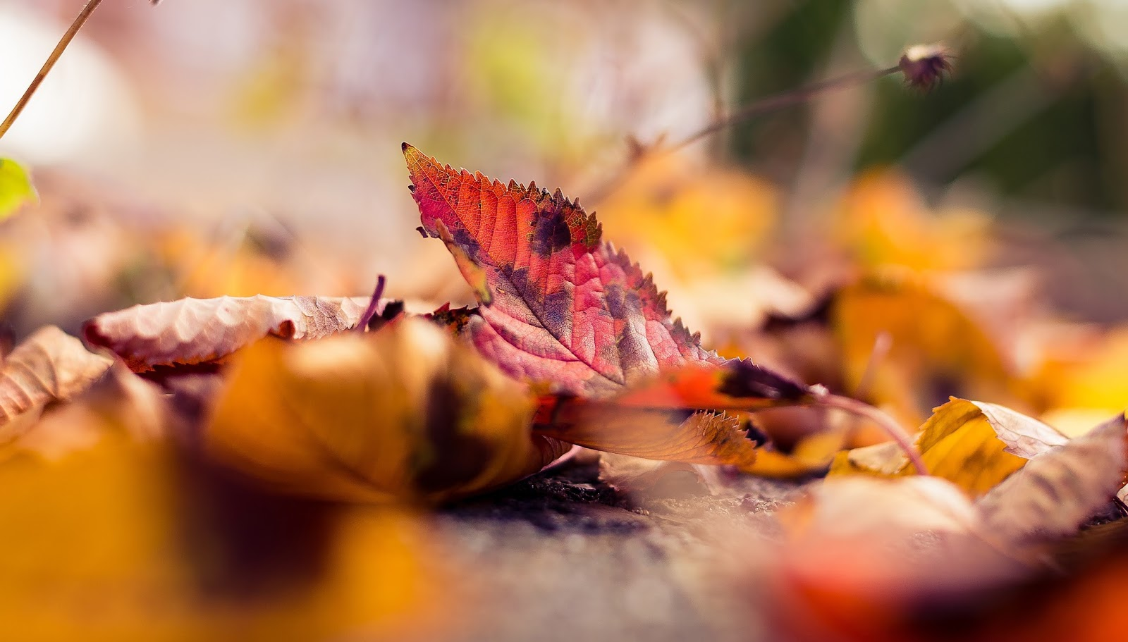 Autumn Colors Leaves Macro Photography