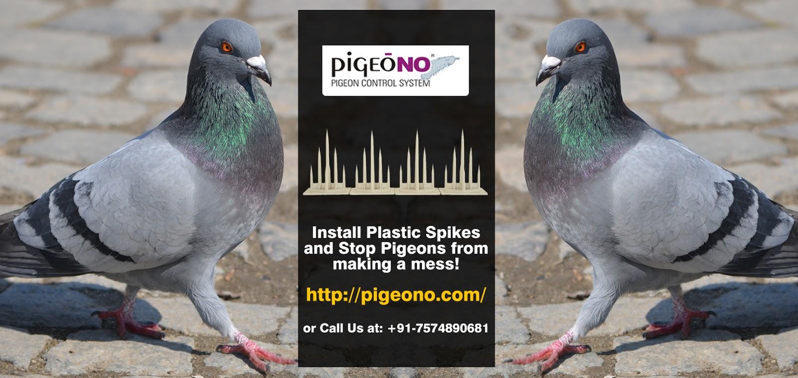 Pigeono - Bird Control Service Provider