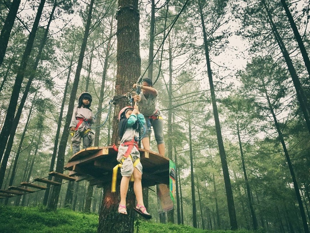 Wahana Flying Fox Hutan Pinus Limpakuwus