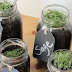 How To Grow An Endless Supply Of Herbs In Mason Jars