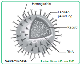 Ciri-ciri virus
