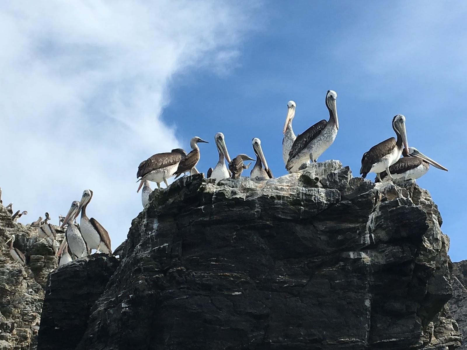 Humbolt Penguin Reserve {Chile}