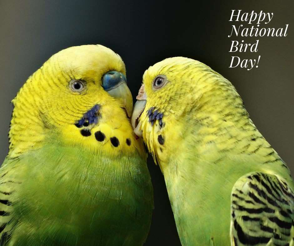 National Bird Day Wishes Lovely Pics