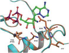 Sudanese Ebola Virus