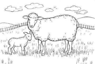 Mewarnai Gambar Binatang Domba Collection Images