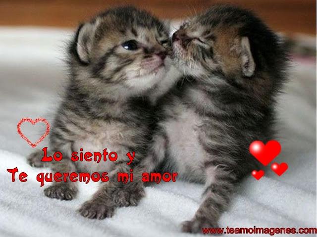 Imágenes de lindos gatitos con la frase lo siento mi amor, teamoimagenes.com