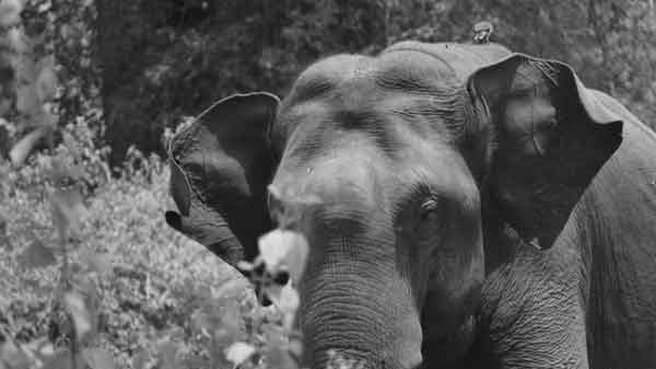 News, Kerala, State, Wayanad, Top-Headlines, Forest, Animal, Death, Tourism, Complaint, Forest Department against private resort in Wayanad for the death of tourist in wild elephant attack