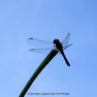Dance of the Dragonfly step 5