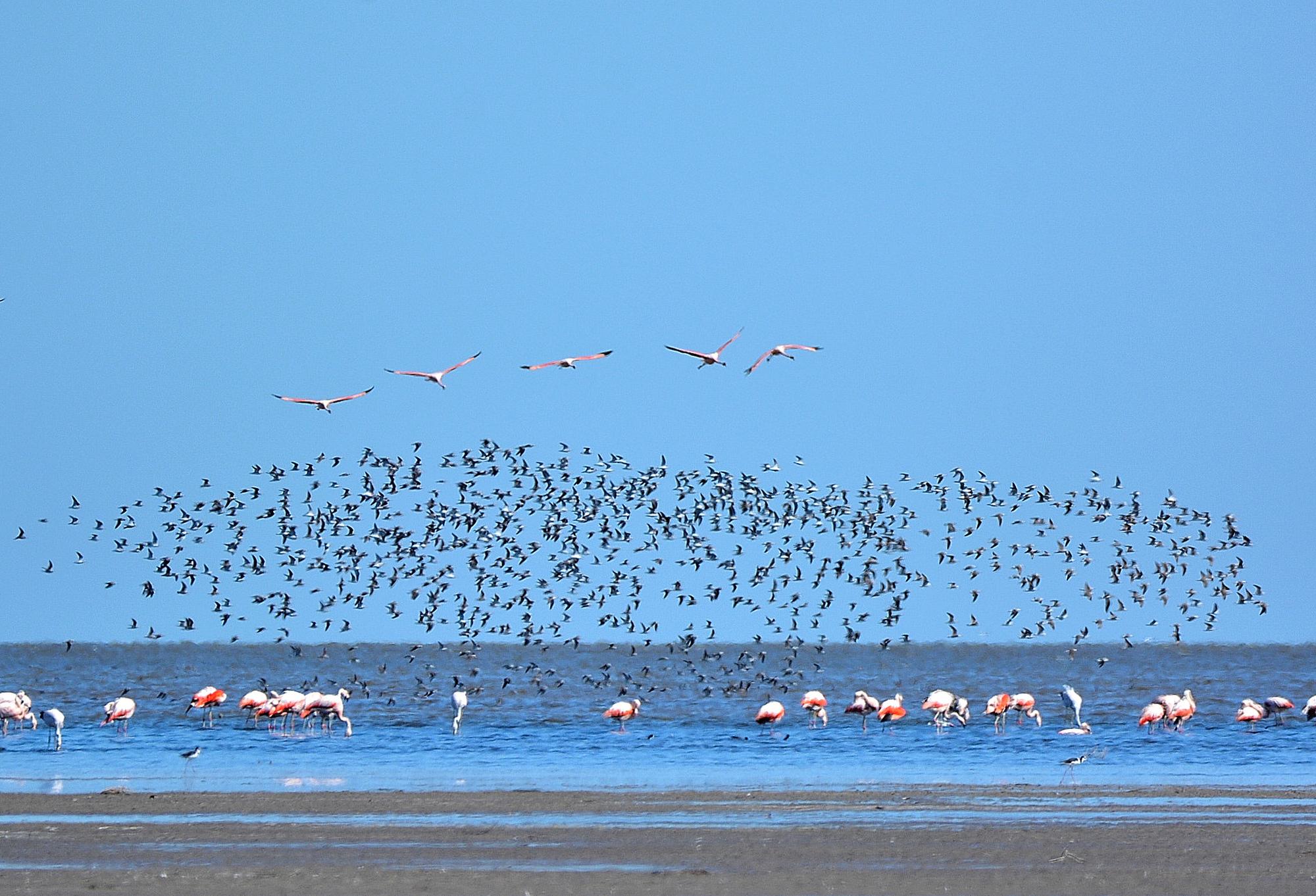 Ansenuza: conoce el nuevo Parque Nacional de Argentina