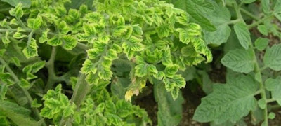 Plantas y fitopatogenos
