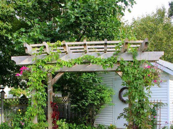 Budget Friendly Tricks to Make your Garden Pop