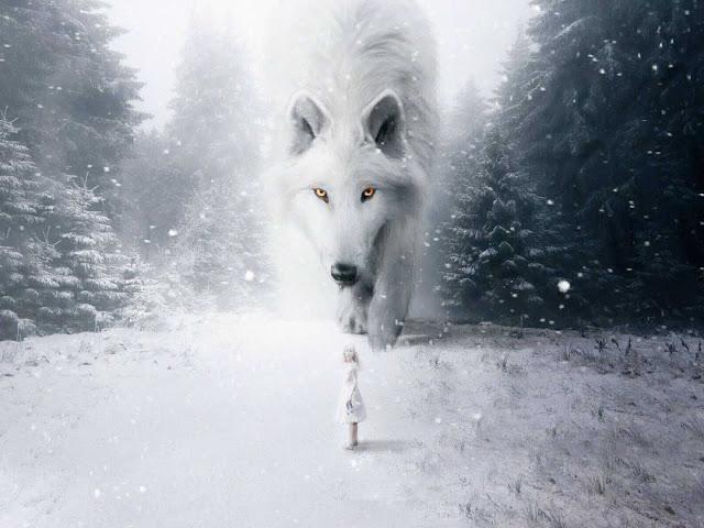 صور ذئاب بيضاء ، صور خلفيات موبايل بيضاء رائعة 2020