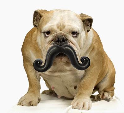 perro con un gran bigote