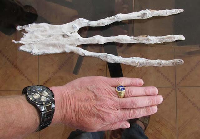 Lewis compara su mano con el hallazgo en Cuzco