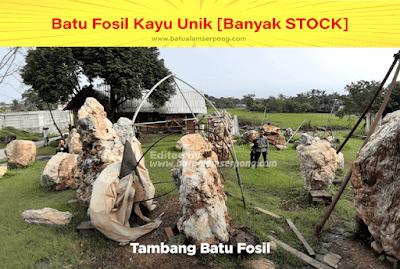 pertambangan batu fosil kayu diindonesia