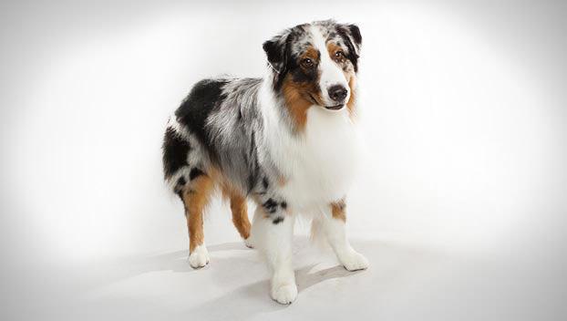 Friendly Dog Breeds