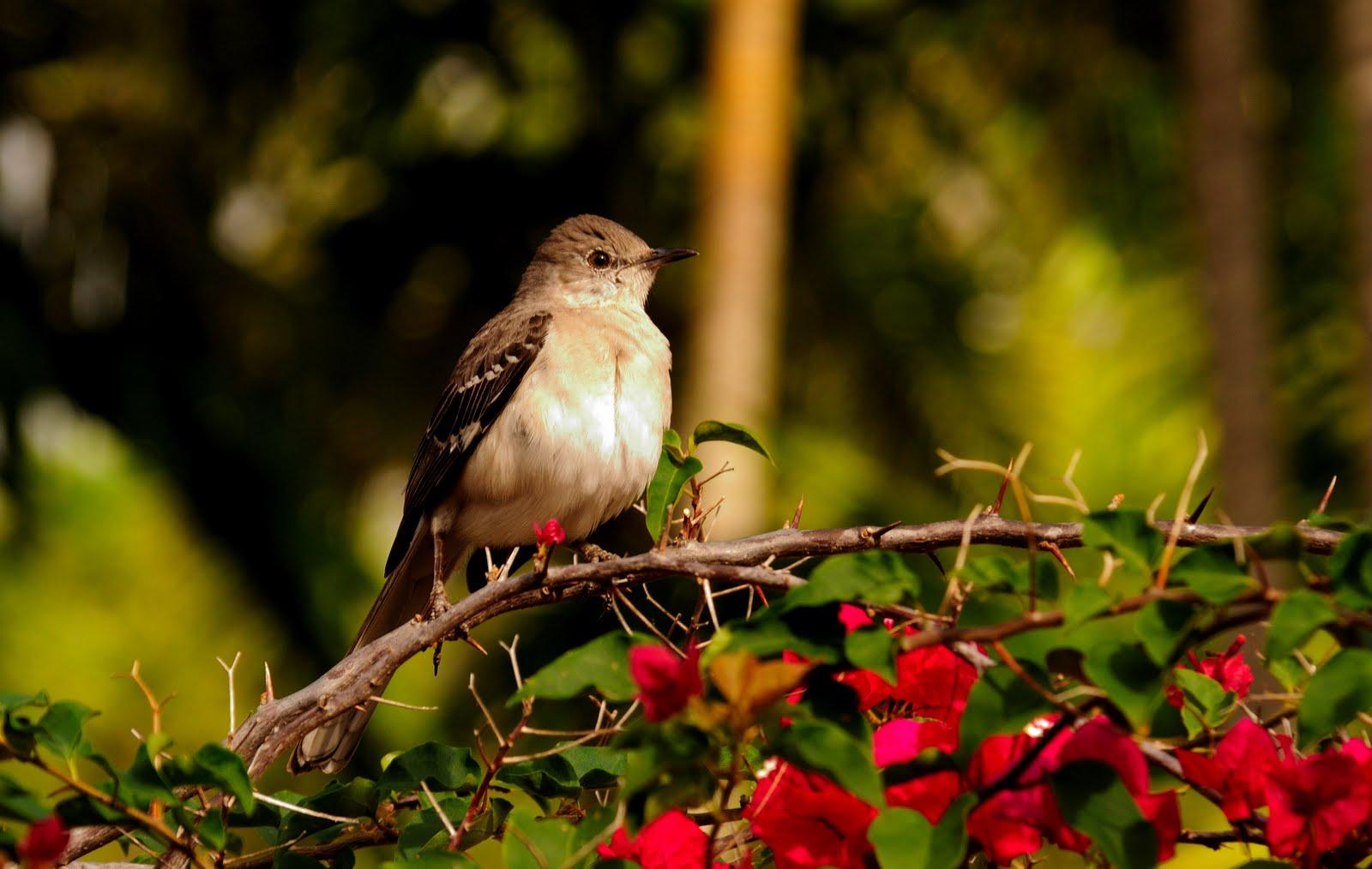 Aves endémicas de Cuba