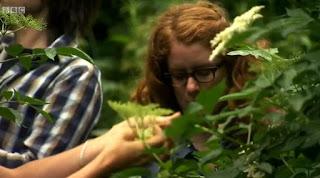 Picking elderflower heads