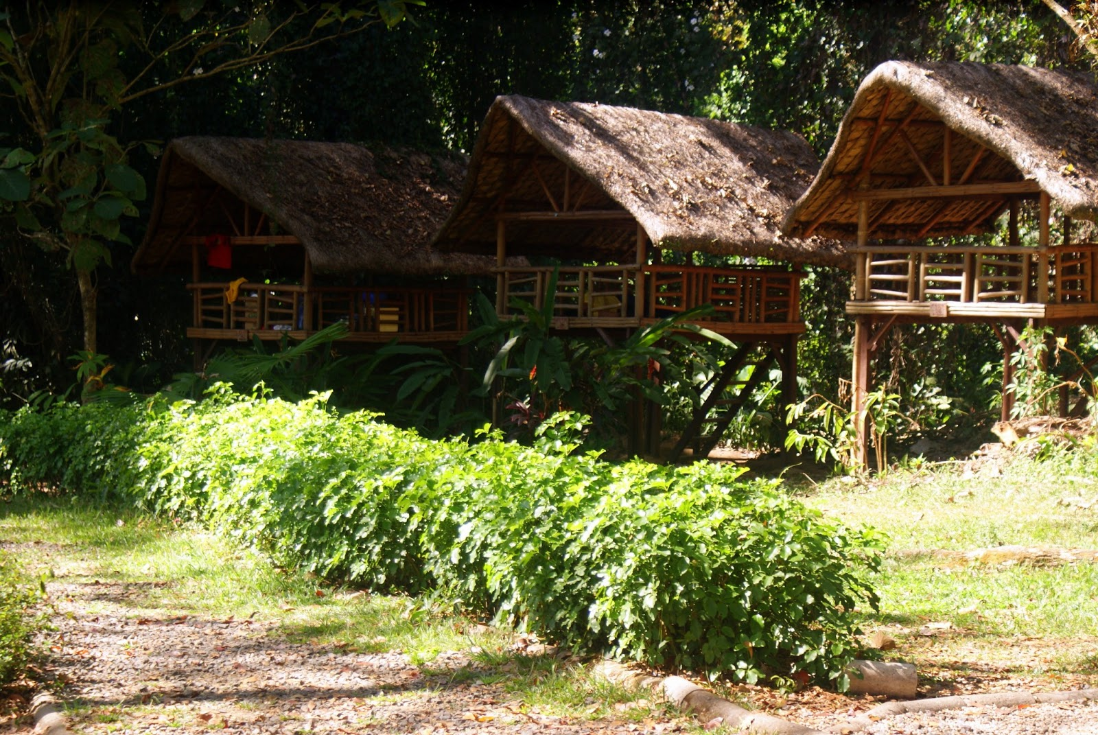Nipa huts for rent - La mesa eco park swimming pool photos ...