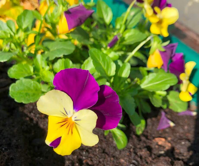 Amores-Perfeitos - Flores delicadas e belas