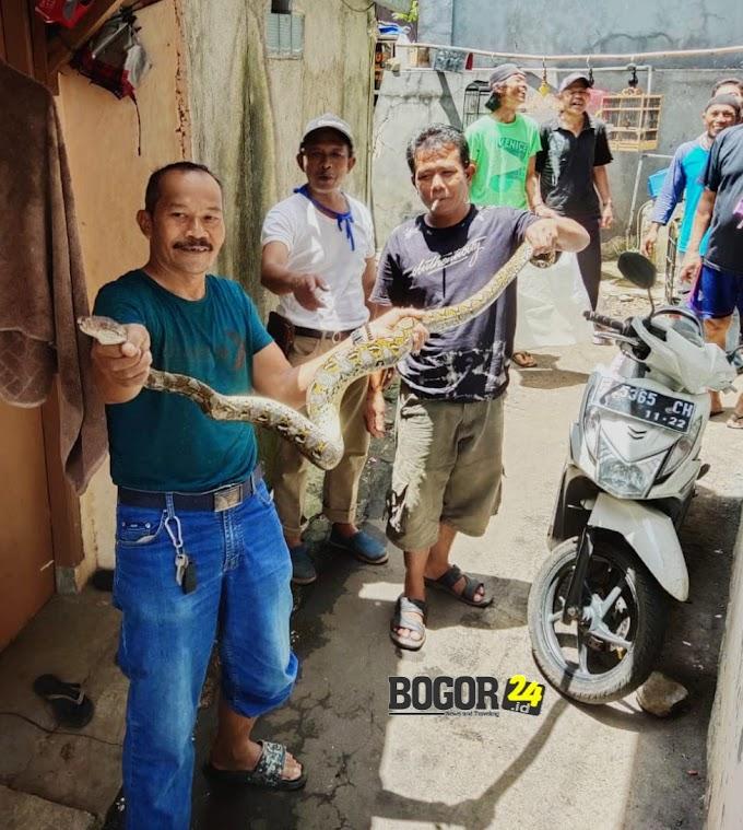 Warga Kampung Sawah Tangkap Ular Sanca 3 Meter
