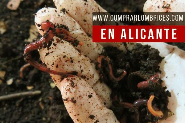 Dónde Comprar Lombrices en Alicante
