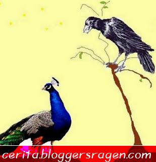Cerita Anak Burung  Merak  dan  Burung  Gagak