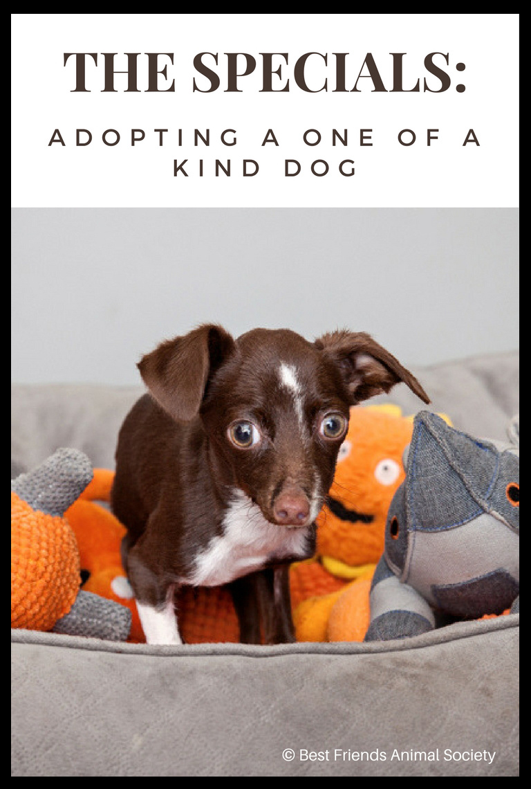 Cletus, the one of kind dog with fused joints, and why you should adopt a one of a kind dog with special needs